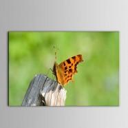 Peinture à l'Huile Imprimée sur Toile en Fibre Chimique - Animal (DK-PH-DH30)